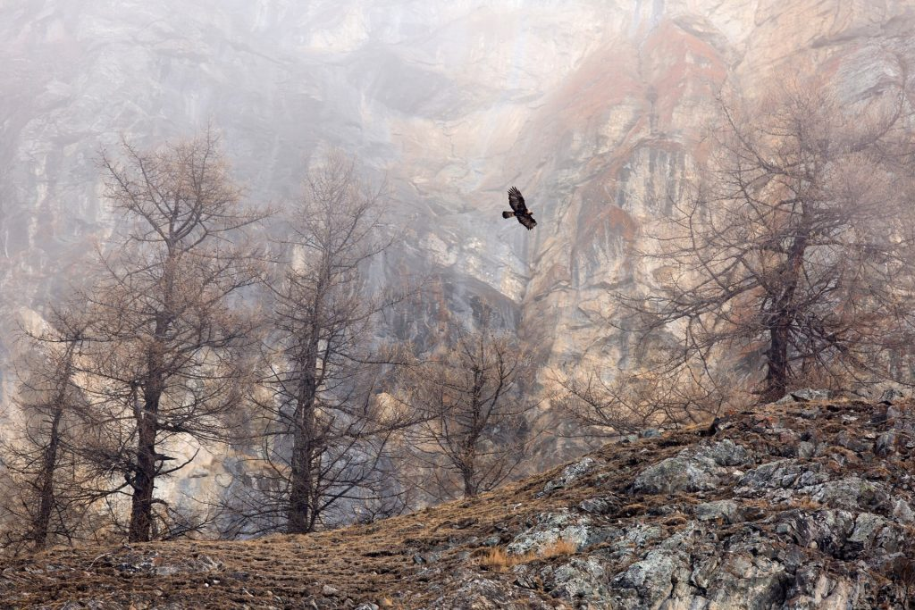 5438 1024x683 - GDT nature photographer of the year 2018 – in pictures
