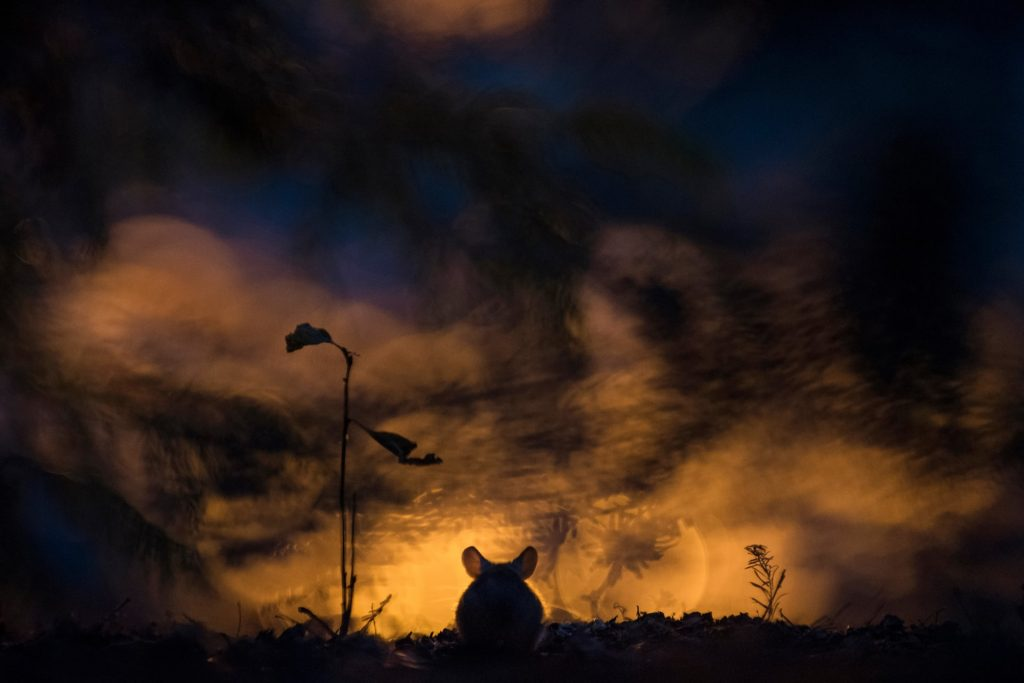 5888 1024x683 - GDT nature photographer of the year 2018 – in pictures