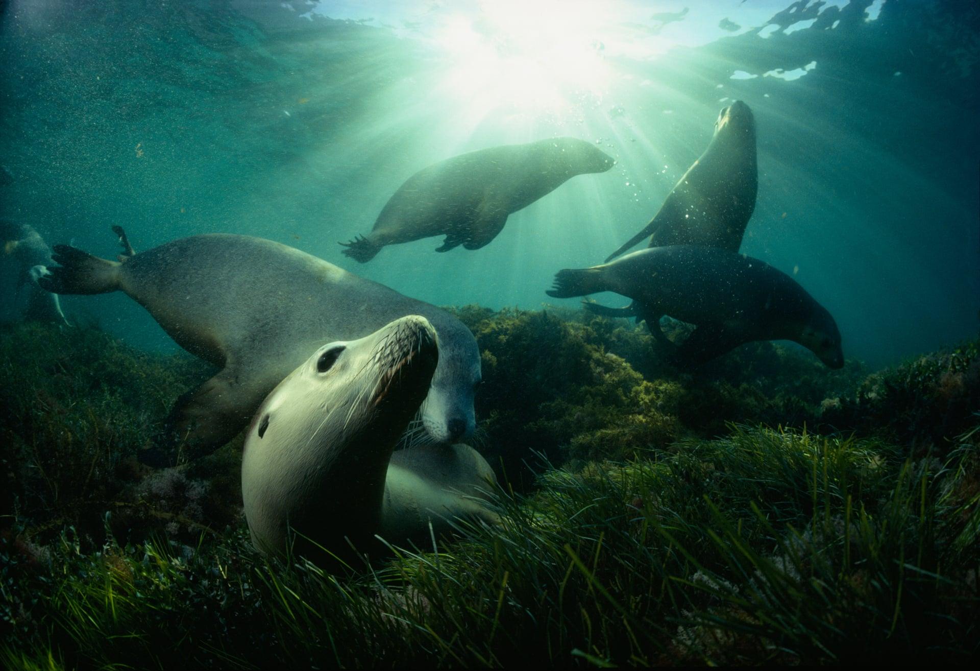 регулярному выполнению животные живущие в океане в картинках метки верхние